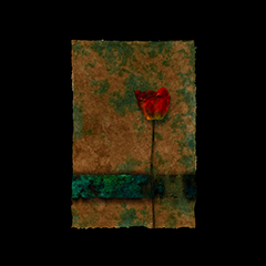 Crimson Solitude